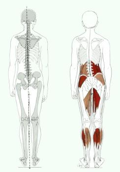 posture8